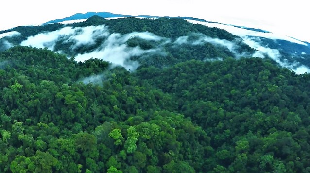 Daftar Taman Nasional di Kalimantan