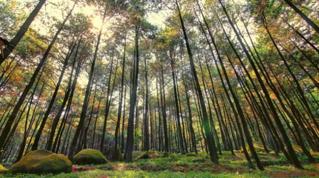 Tiket dan Rute, Lokasi Lengkap Taman Wisata Alam Gunung Pancar Bogor