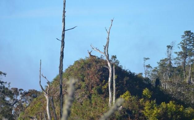 Gunung Batusibela maluku